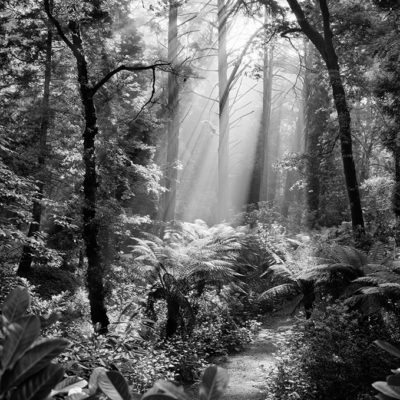 Entrada de luz en el bosque Alantejo 587,4 mb rgb16 RET